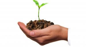 Hand där en planta växer. Foto.